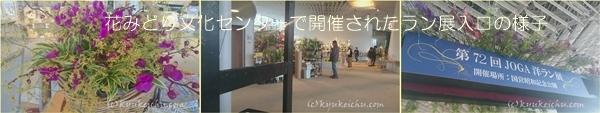 花みどり文化センターでラン展が開催