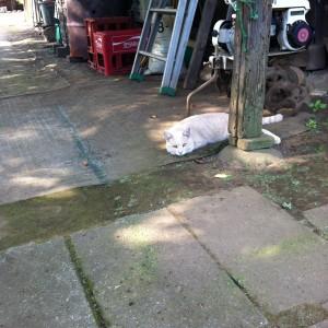 納屋の前で休憩する猫