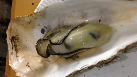 焼いた牡蠣