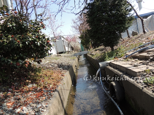 かけ流しの温泉水は小川へ排水