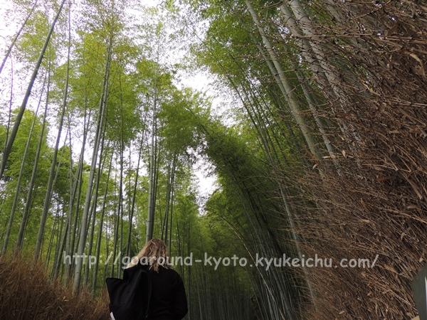 京都嵯峨野竹林の小路