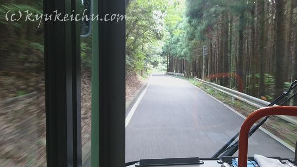 鹿野山の山林
