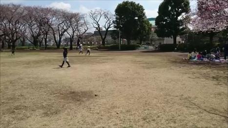 東京都下近所の公園東側の桜その1170407